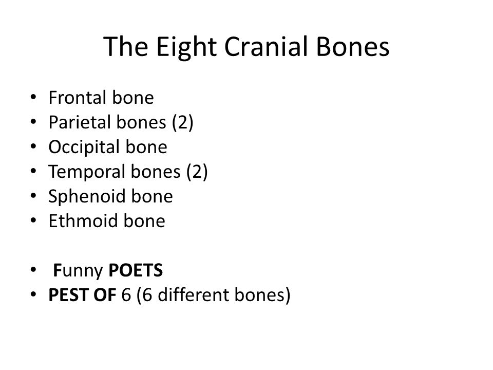 The Eight Cranial Bones