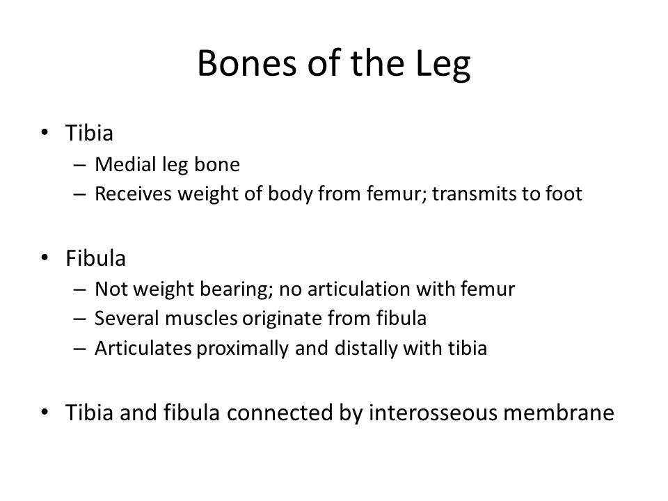 Bones of the Leg Tibia Fibula