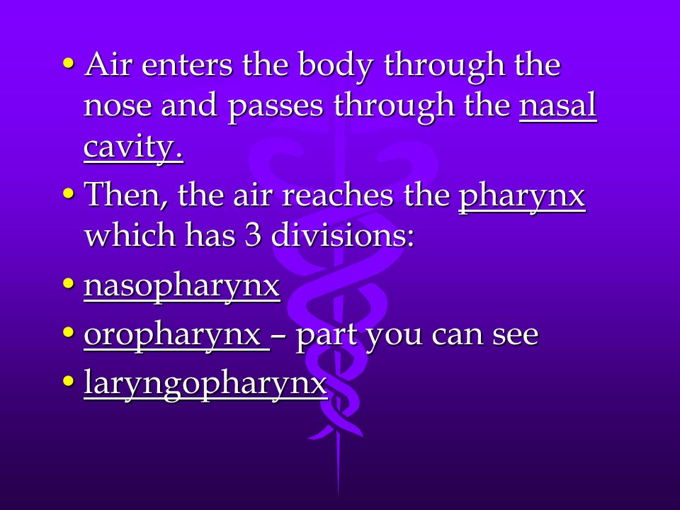 Air enters the body through the nose and passes through the nasal cavity.