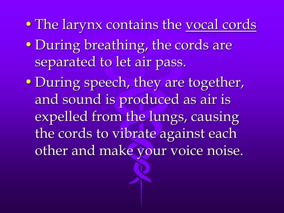 The larynx contains the vocal cords
