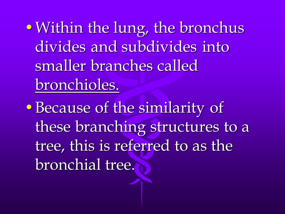 Within the lung, the bronchus divides and subdivides into smaller branches called bronchioles.