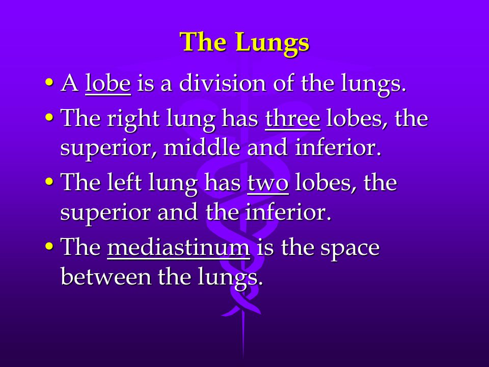 The Lungs A lobe is a division of the lungs.