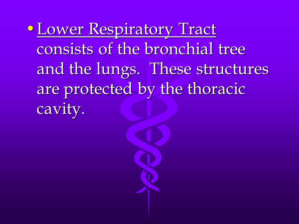 Lower Respiratory Tract consists of the bronchial tree and the lungs