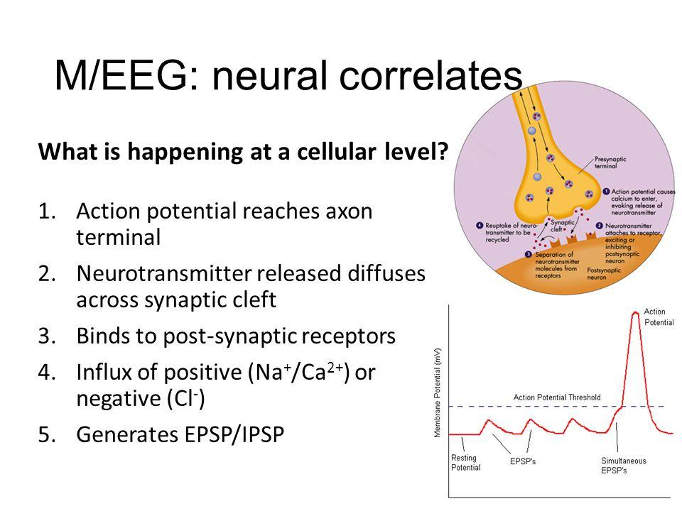 M/EEG: neural correlates