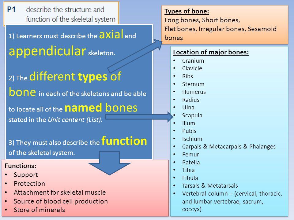 Flat bones, Irregular bones, Sesamoid bones