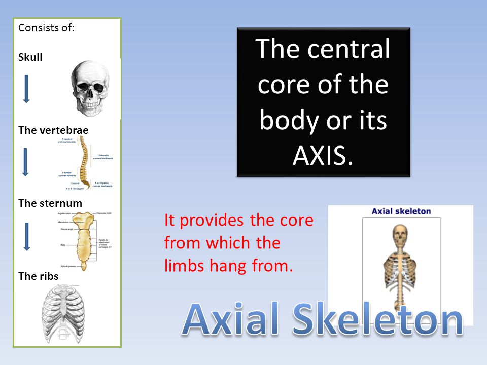 The central core of the body or its AXIS.