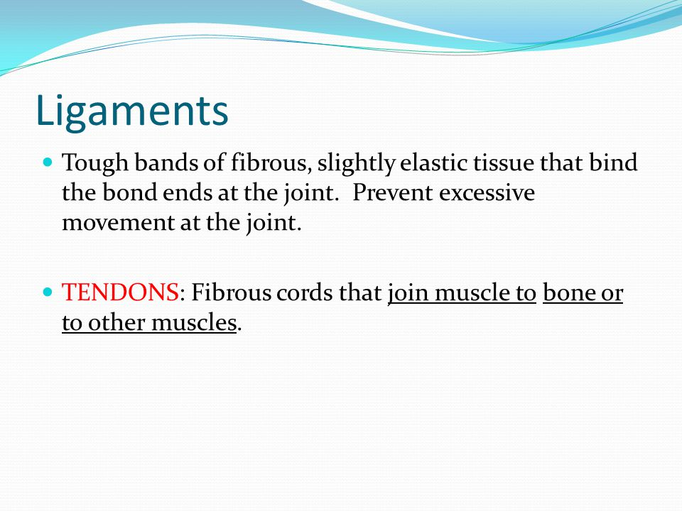 Ligaments Tough bands of fibrous, slightly elastic tissue that bind the bond ends at the joint. Prevent excessive movement at the joint.