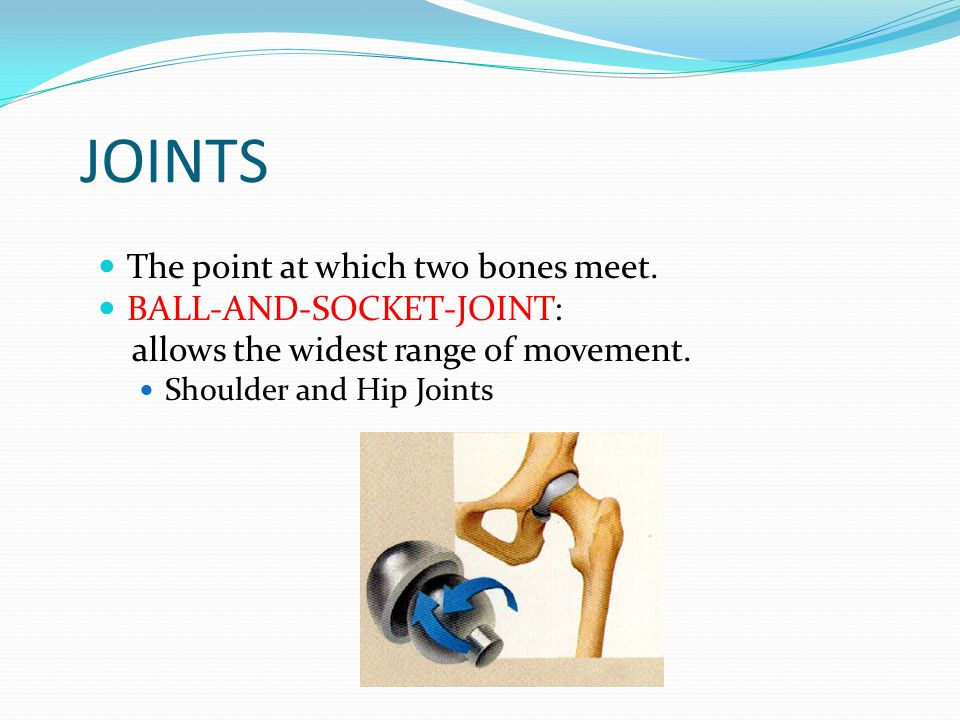 JOINTS The point at which two bones meet. BALL-AND-SOCKET-JOINT: