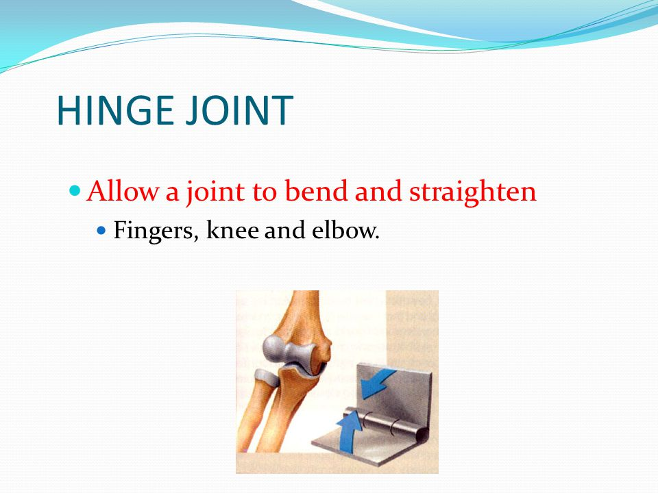 HINGE JOINT Allow a joint to bend and straighten