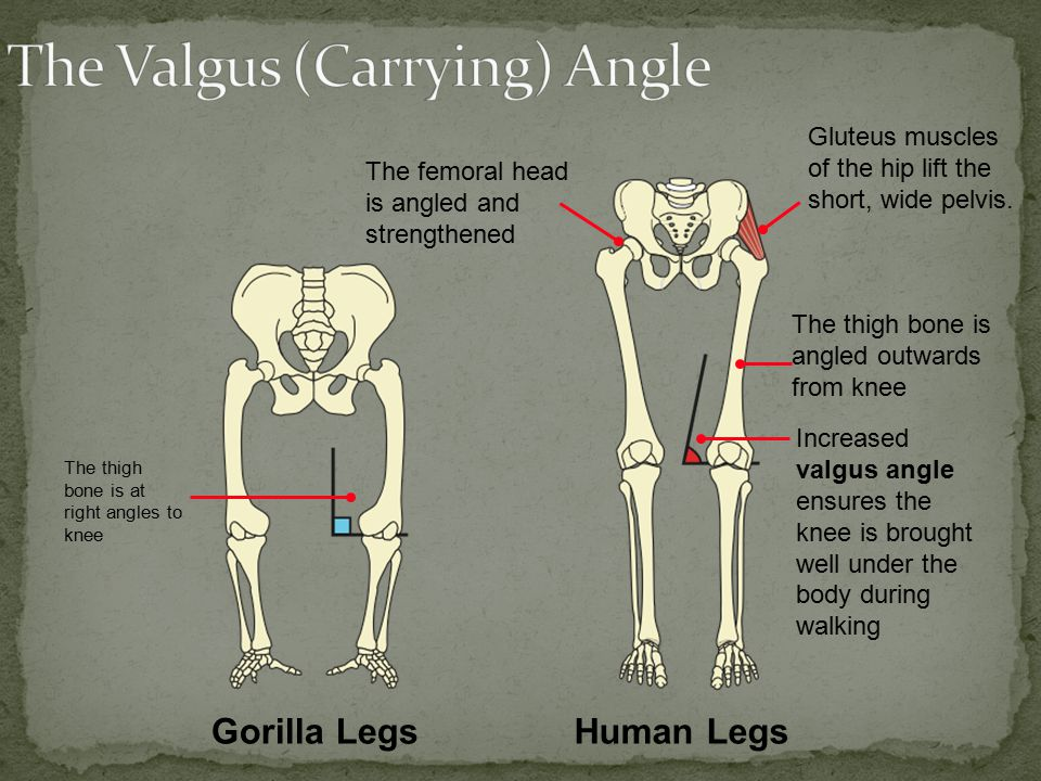 The Valgus (Carrying) Angle