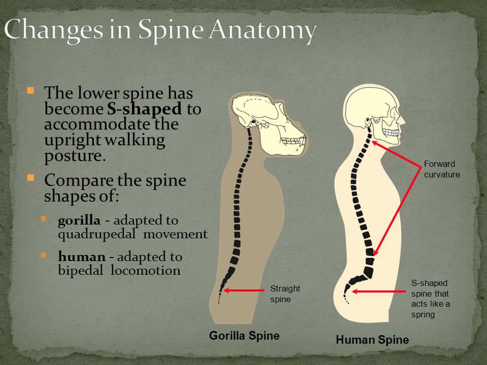 Changes in Spine Anatomy