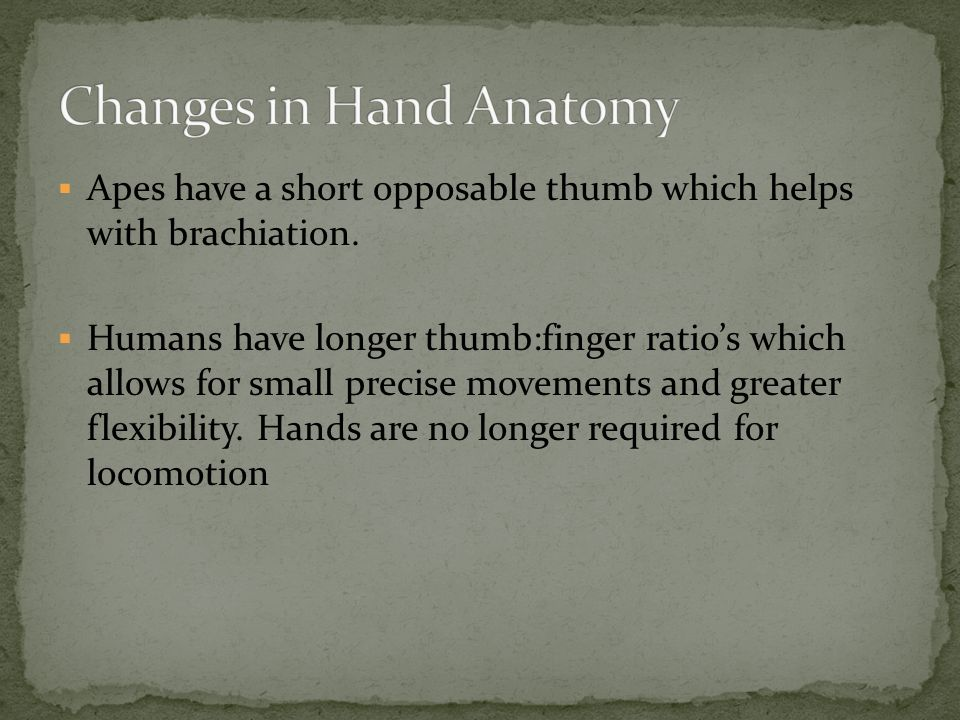 Changes in Hand Anatomy