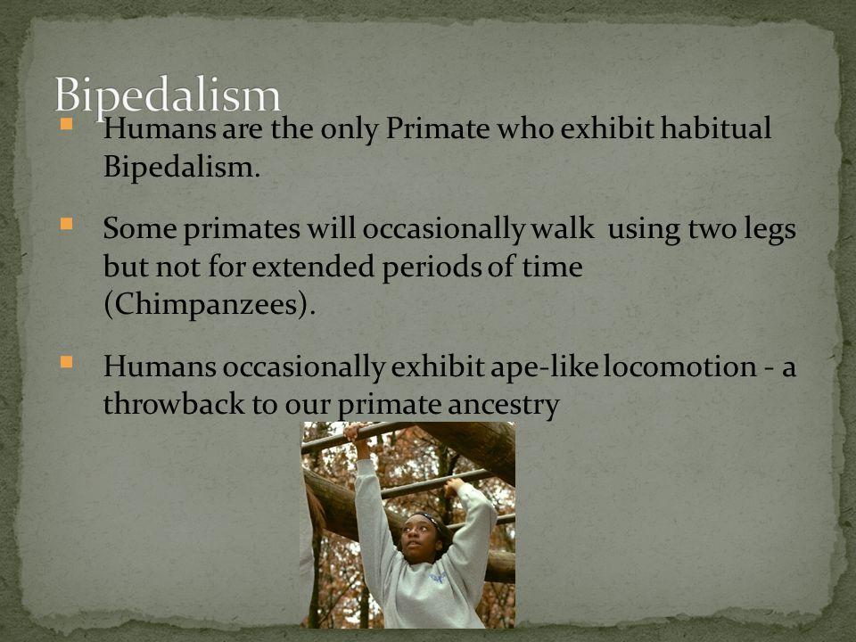 bipedalism essay