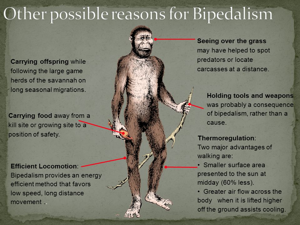 Other possible reasons for Bipedalism