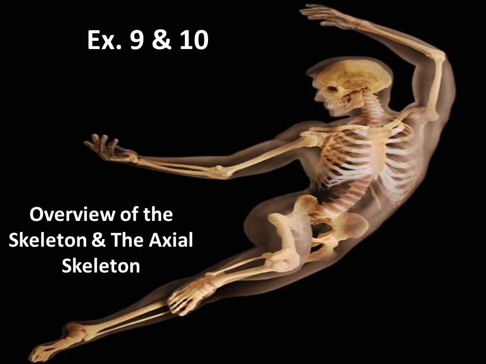 Overview of the Skeleton & The Axial Skeleton