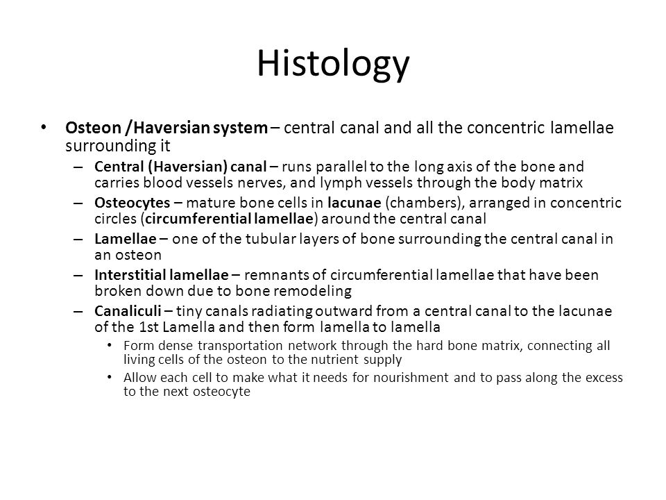 Histology Osteon /Haversian system – central canal and all the concentric lamellae surrounding it.
