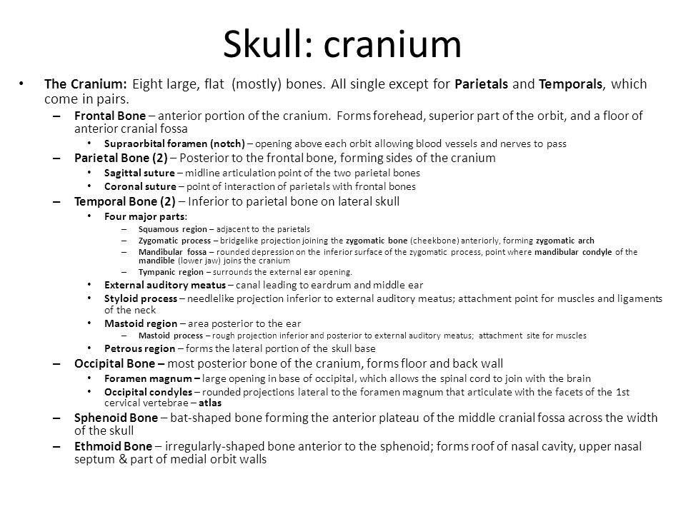 Skull: cranium The Cranium: Eight large, flat (mostly) bones. All single except for Parietals and Temporals, which come in pairs.