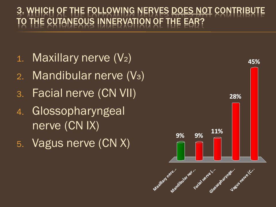 Glossopharyngeal nerve (CN IX) Vagus nerve (CN X)