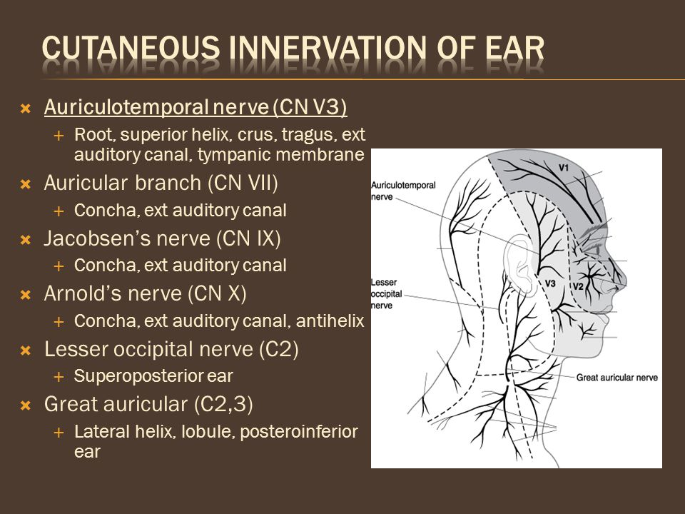 Cutaneous Innervation of Ear