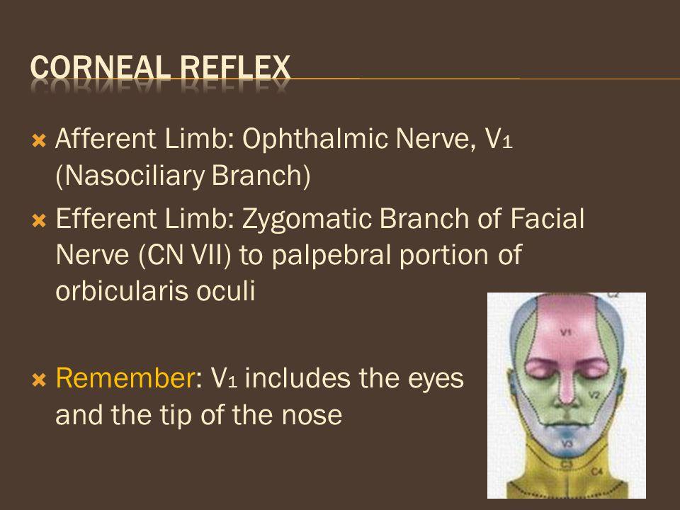 Corneal Reflex Afferent Limb: Ophthalmic Nerve, V1 (Nasociliary Branch)