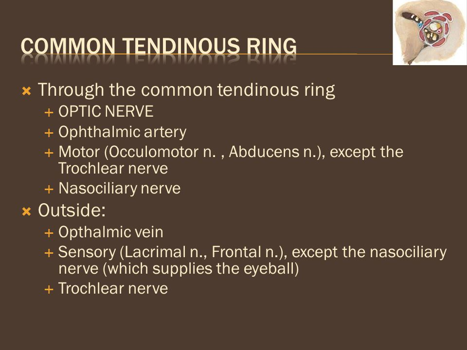Common tendinous ring Through the common tendinous ring Outside: