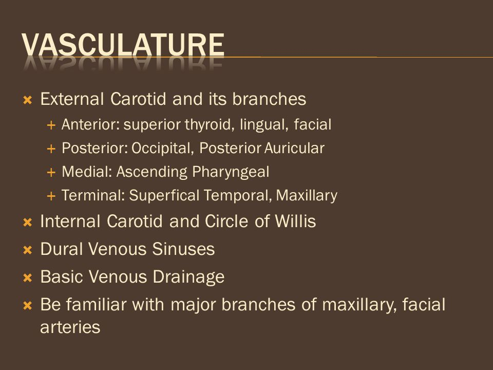 Vasculature External Carotid and its branches