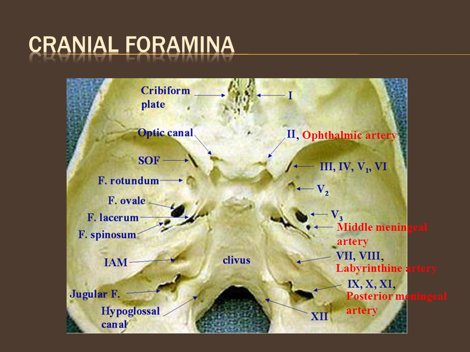 Cranial Foramina , Ophthalmic artery Middle meningeal artery ,