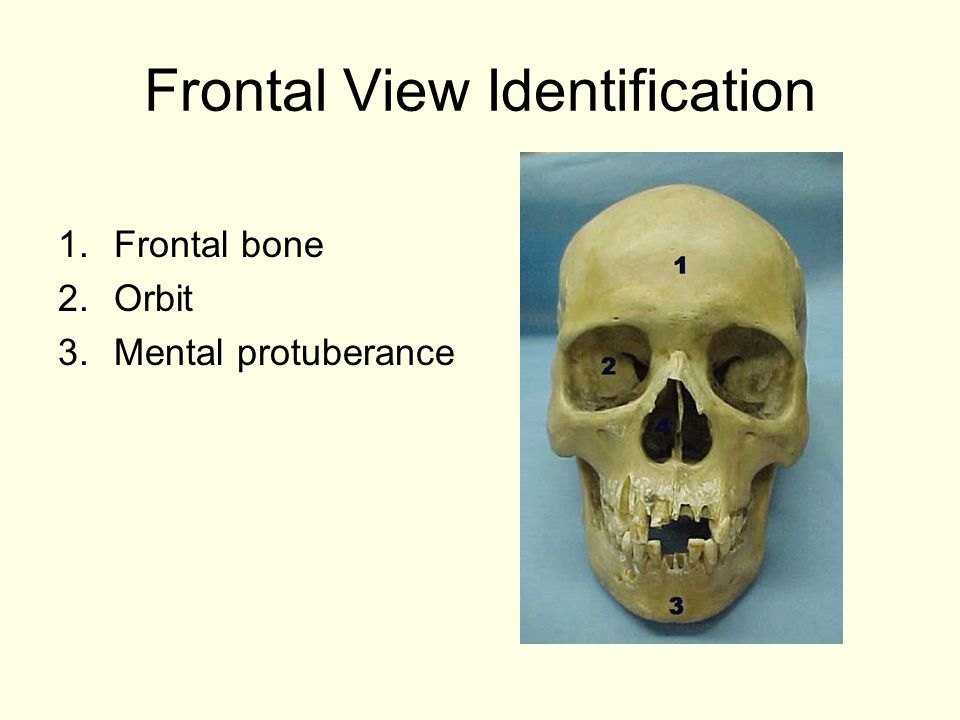 Frontal View Identification