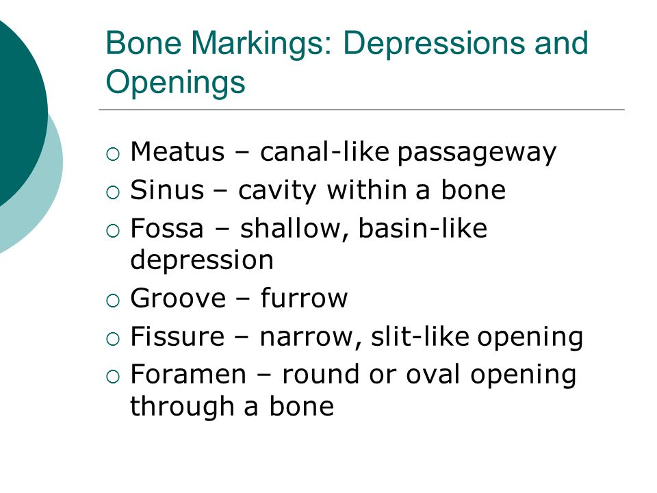 Bone Markings: Depressions and Openings