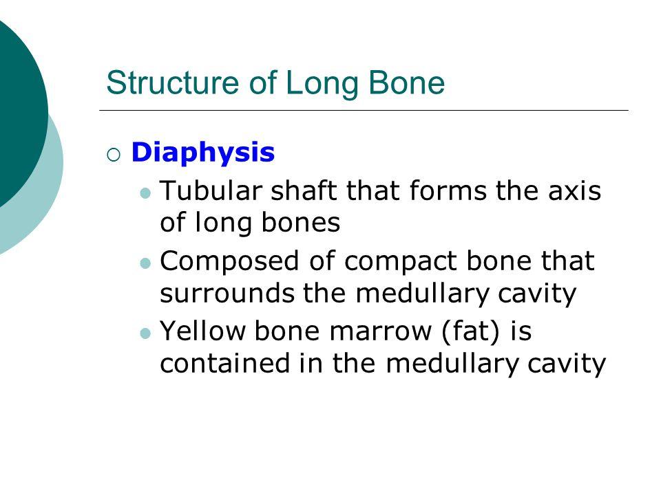 Structure of Long Bone Diaphysis