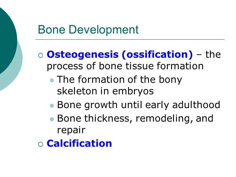 Bone Development Osteogenesis (ossification) – the process of bone tissue formation. The formation of the bony skeleton in embryos.