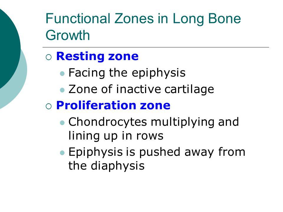 Functional Zones in Long Bone Growth