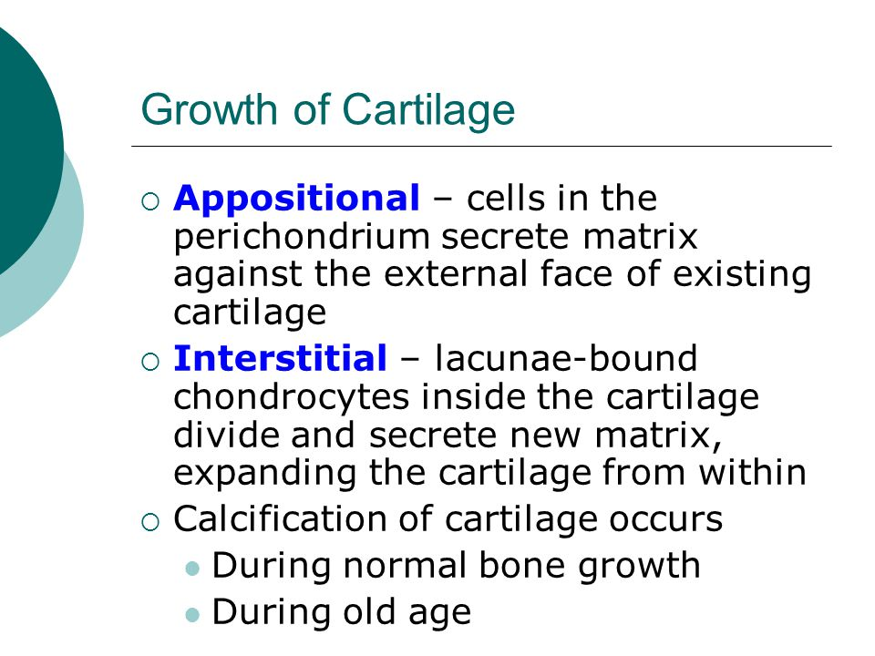 Growth of Cartilage Appositional – cells in the perichondrium secrete matrix against the external face of existing cartilage.