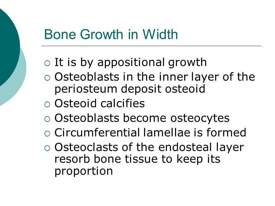 Bone Growth in Width It is by appositional growth