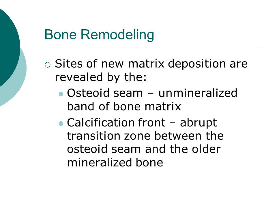 Bone Remodeling Sites of new matrix deposition are revealed by the: