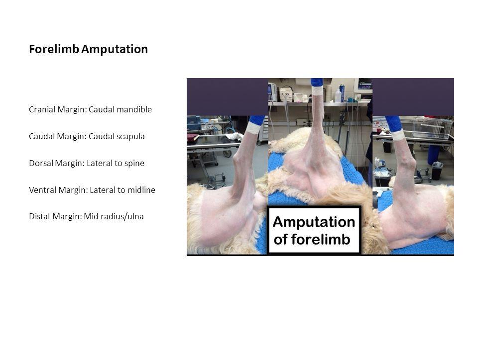 Forelimb Amputation Cranial Margin: Caudal mandible