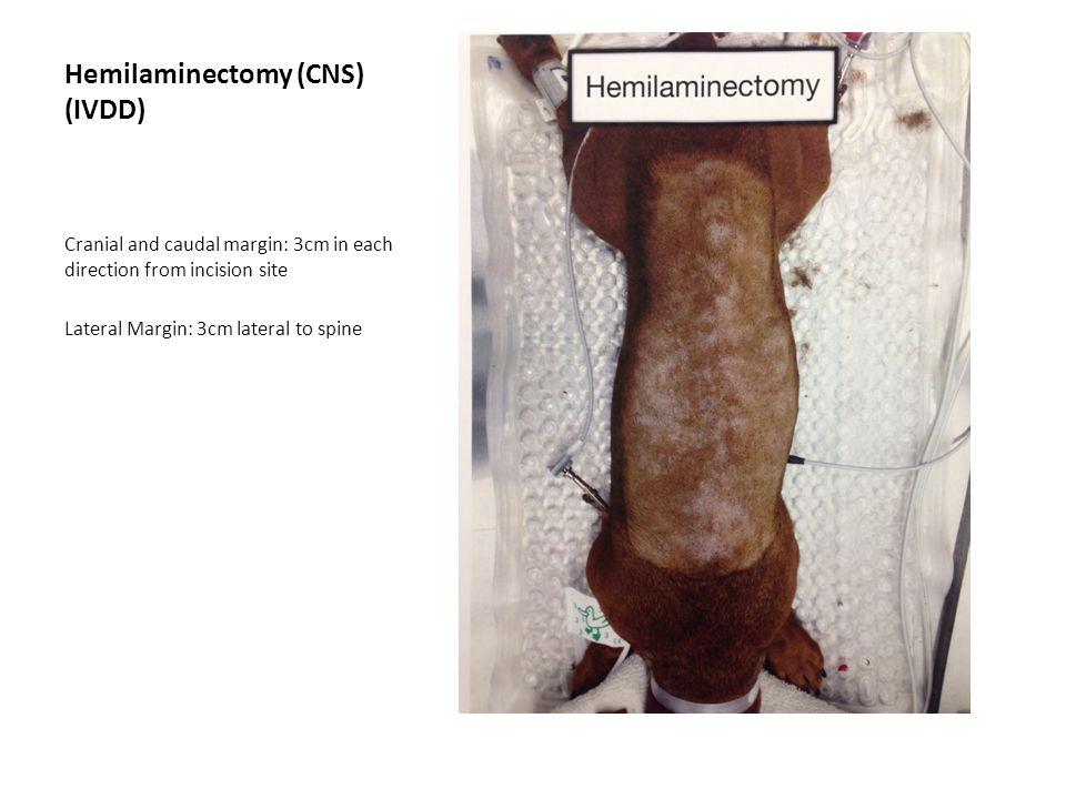Hemilaminectomy (CNS) (IVDD)