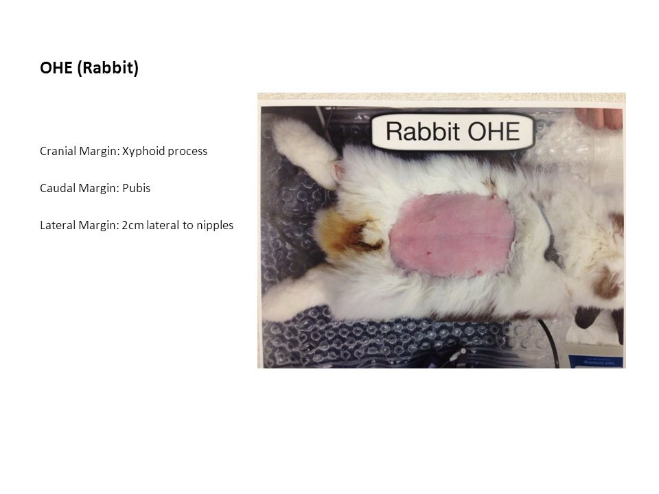 OHE (Rabbit) Cranial Margin: Xyphoid process Caudal Margin: Pubis