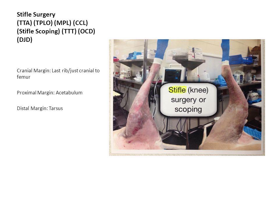 Stifle Surgery (TTA) (TPLO) (MPL) (CCL) (Stifle Scoping) (TTT) (OCD) (DJD)