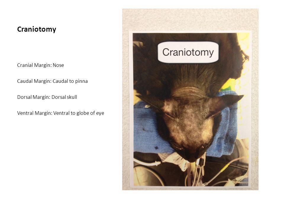 Craniotomy Cranial Margin: Nose Caudal Margin: Caudal to pinna