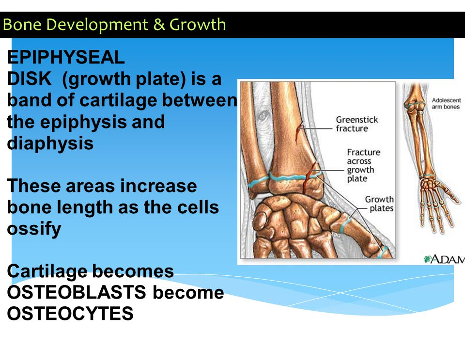 Bone Development & Growth