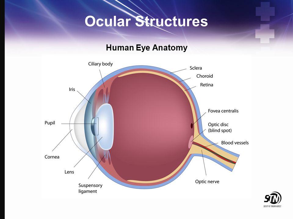 6_Maxillofacial and Ocular Injuries