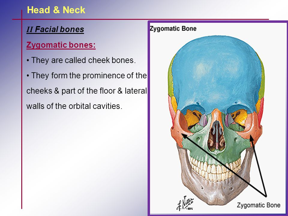 Head & Neck II Facial bones Zygomatic bones: