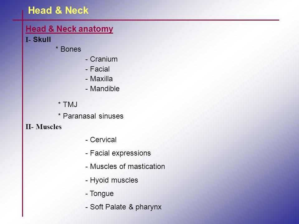 Head & Neck Head & Neck anatomy I- Skull * Bones - Cranium - Facial