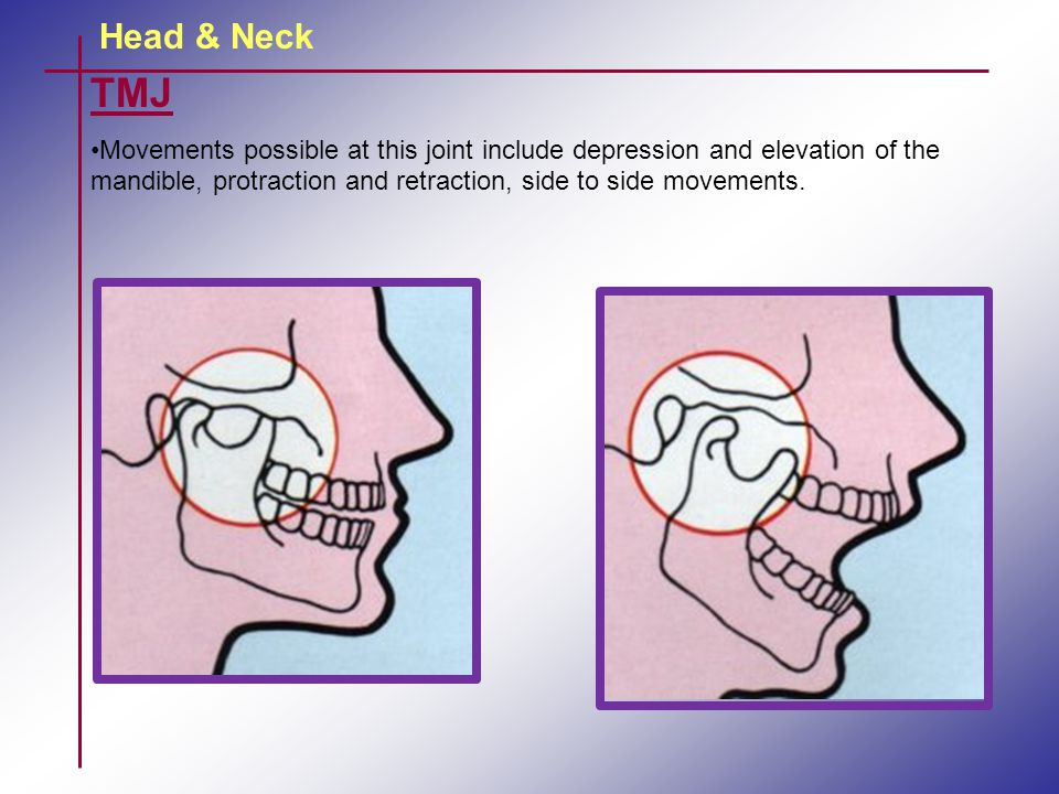 Head & Neck TMJ.