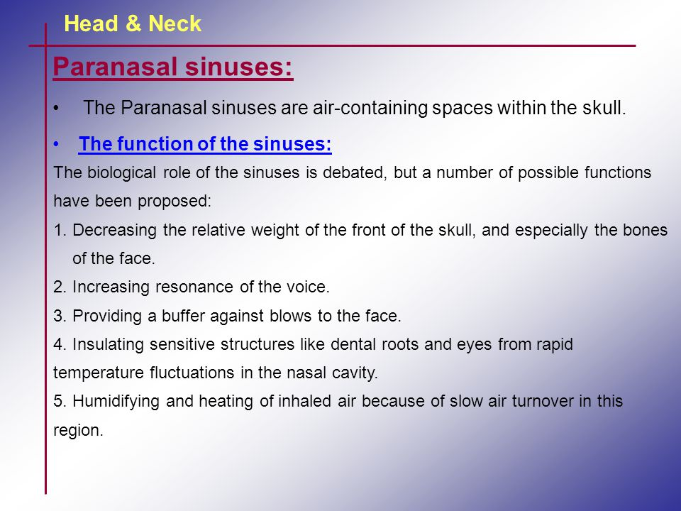 Paranasal sinuses: Head & Neck