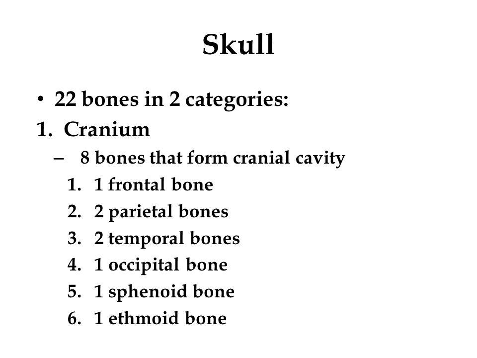 Skull 22 bones in 2 categories: Cranium