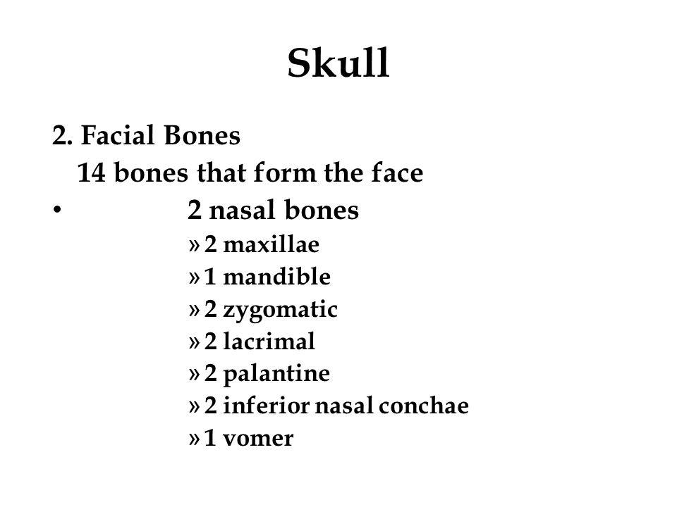 Skull 2. Facial Bones 14 bones that form the face 2 nasal bones