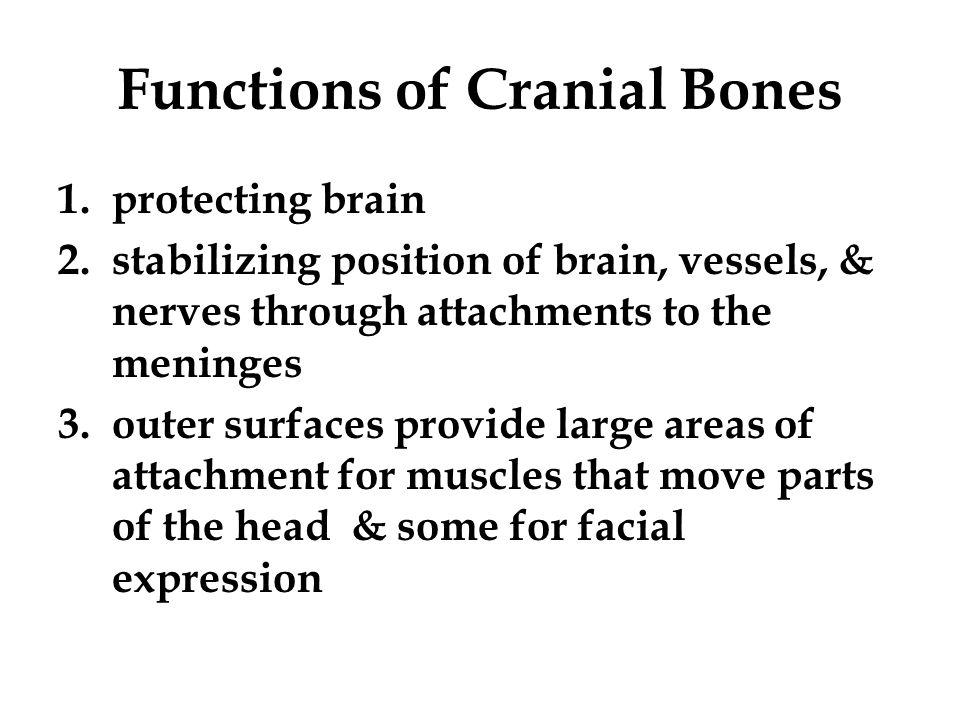 Functions of Cranial Bones