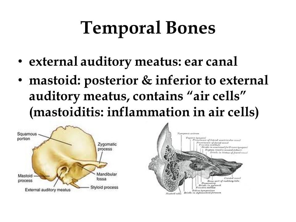 Honors Anatomy for copy - ppt video online download